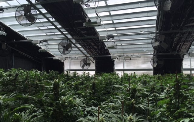 Energy-efficient Cannabis Greenhouse