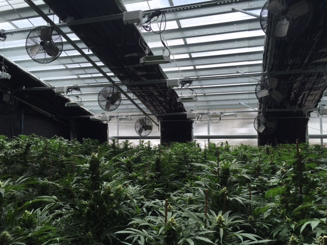 3 Signs you Should Invest in a Sealed Cannabis Greenhouse