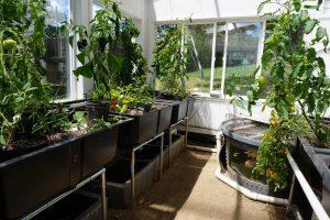 back yard aquaponic greenhouse