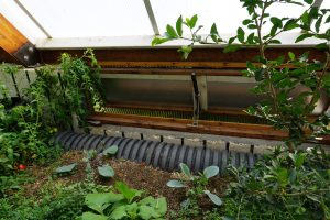 Passive solar vent in a year-round commercial greenhouse
