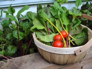 Year-round harvests from a greenhouse