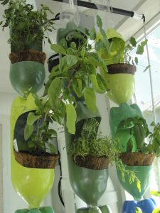 Vertical planters in a greenhouse