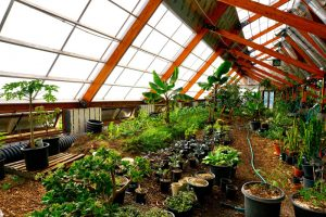Tropical Greenhouse at the Golden Hoof Farm