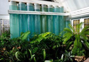 Passive solar greenhouse with water barrels. Cheyenne Botanic Gardens