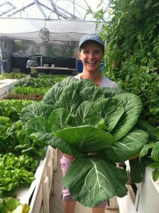 super-sized collard greens from aquaponic greenhouse_flourish farms
