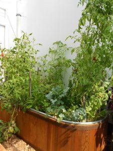 self-watering planter_farm tub