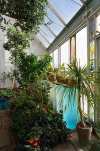 Passive solar greenhouse with water barrels