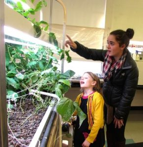 helios aquaponic greenhouse