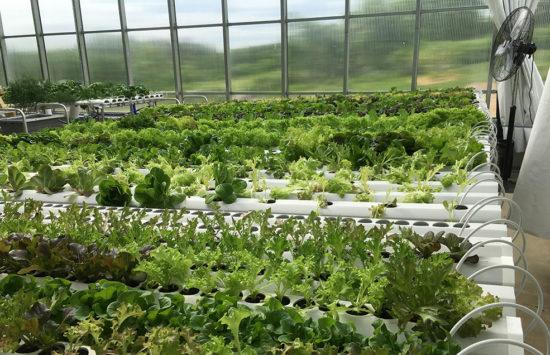 ceres_hydroponics
