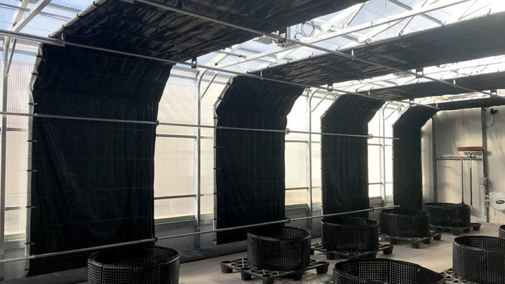 light deprivation in greenhouse