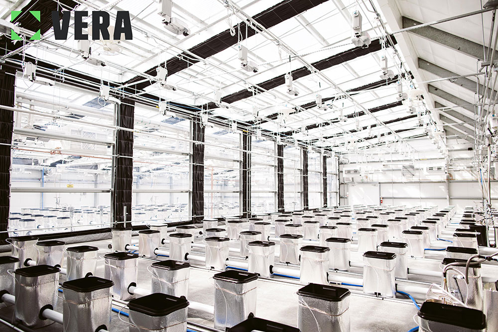 Cannabis Greenhouses | Commercial Greenhouse Climate Control Systems