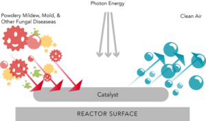 Photocatalytic Process