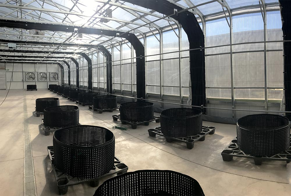 Light Deprivation Greenhouse Blackout Greenhouses For