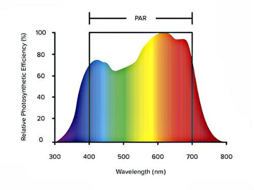 measuring PAR light